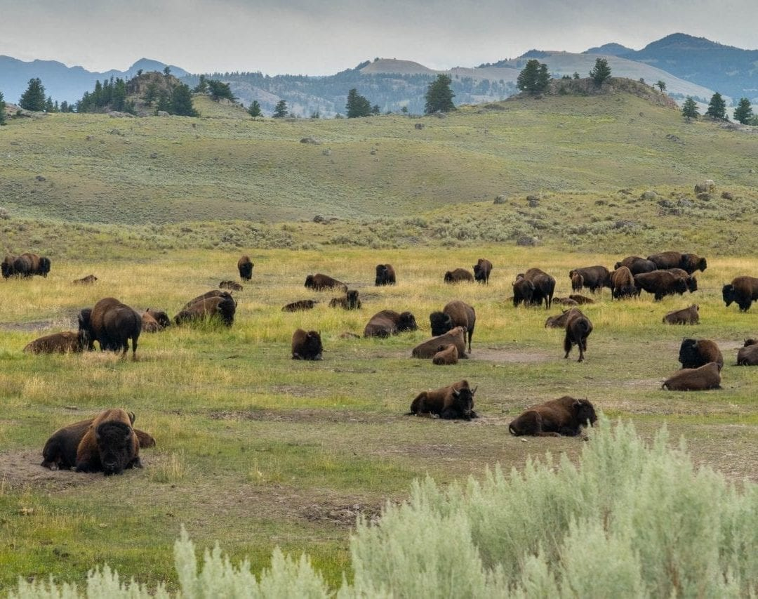 Best Things To Do in Yellowstone National Park on a Map ...