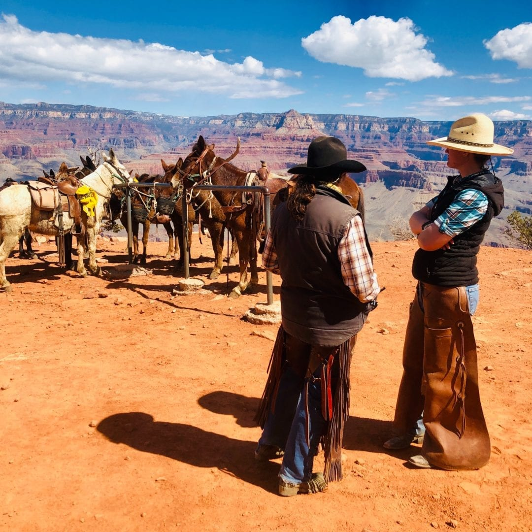 horse and mule tours grand canyon